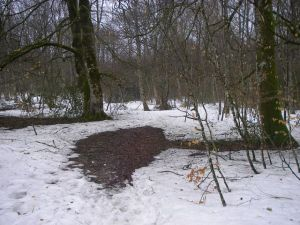 Nieve en el Camino.