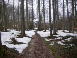 El camino a través del bosque con la niieve resultaba emocionante, pero debía irse con cuidado y no resbalar