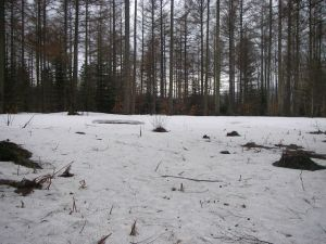 Nieve en el Camino