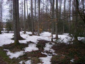 Aspecto que presentaba el bosque