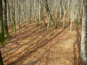 Durante un buen tramo el Camino transcurre por un bosque frondoso, pero con claridad suficiente para que entre la luz del Sol. Es espectacular