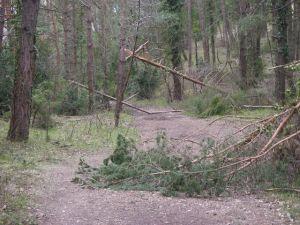 Monte del Erro. Debido a la nieve de este invierno muchos árboles se habían roto y atravesaban el Camino