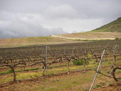 Camino a Villamayor de Monjardín