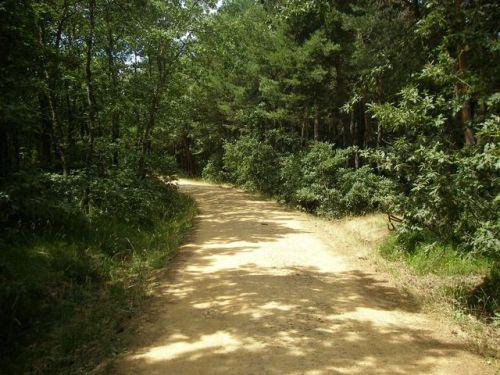 Camino de San Juan de Ortega a Agés