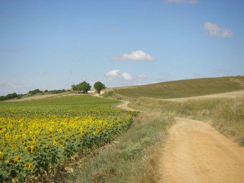 Camino hacia Itero de la Vega