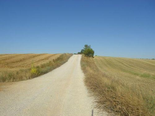 La Senda de los peregrinos. 12 km. en líniea recta (antigua vía romana)