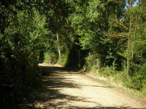 Camino por Villadangos del Páramo.
