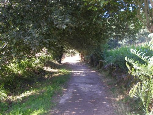 Ruta de Samos - Sarria - Ferreiros