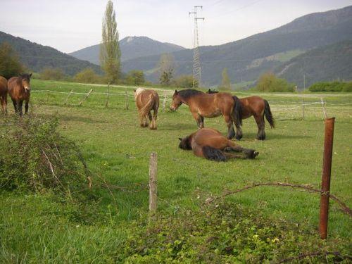 De Zubiri a Pamplona