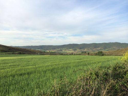 Camino a Estella