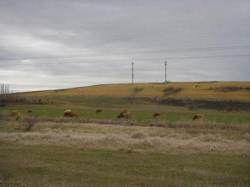 De Mansilla de las Mulas a León